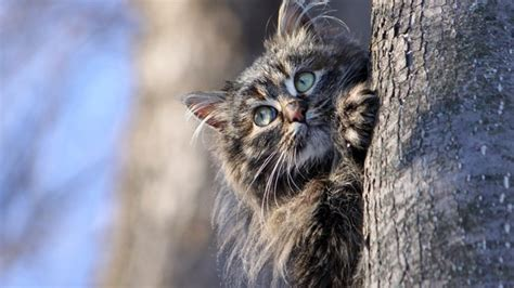 Cat Hiding Behind Tree, HD Animals, 4k Wallpapers, Images