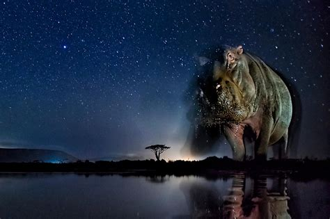 8 Haunting Pictures of Wild Animals at Night